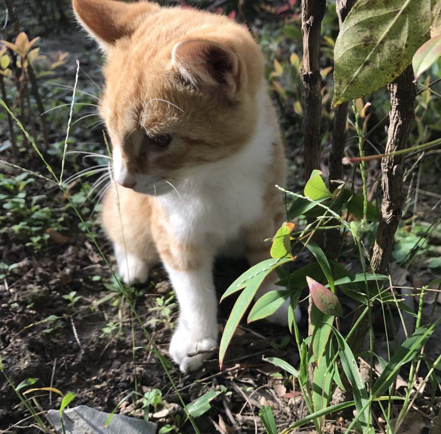 家里养猫对风水有影响吗?或要注意什么问题