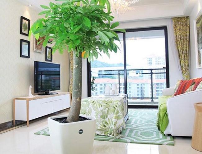 家居风水中选择盆栽有什么要求