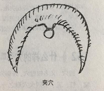 """什么样的穴形可被称为""""突穴""""?"""