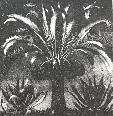 庭院中适合种植哪些植物?