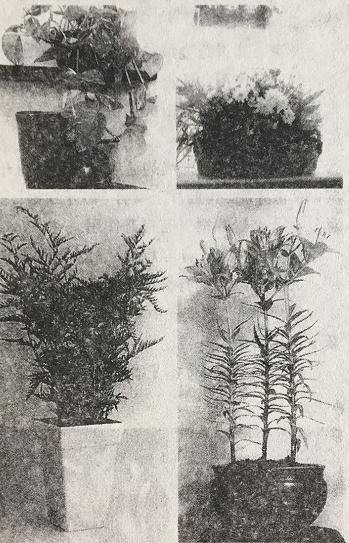 哪些植物具有驱邪的功效?