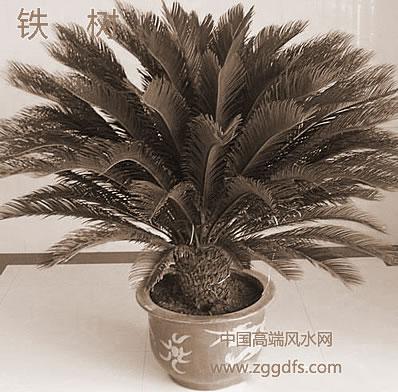 风水师告诉大家 客厅的风水绿色植物如何放置