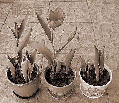 公司办公室放置过多的绿色植物对风水学会有什么伤害