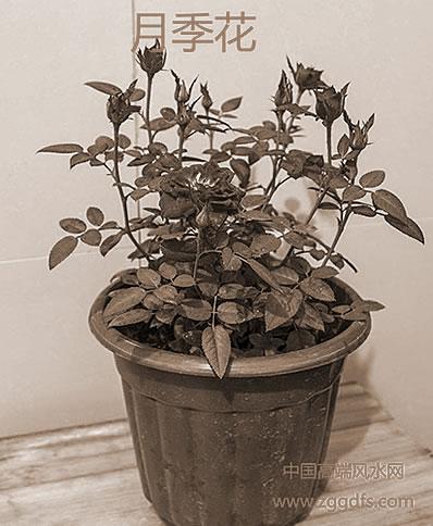 卧室植物放置风水学:八种绿色植物不适合放置