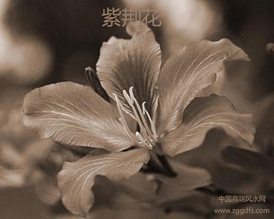卧房盆栽花卉放置的装修风水禁忌