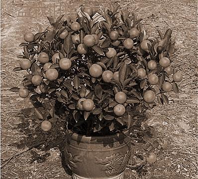 各种绿色植物的居家风水作用:风水植物详细说明