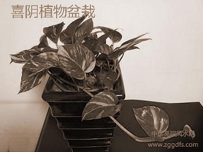 旺财绿色植物是不是放置越大风水学越多好?