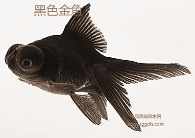 家庭养鱼风水专业知识
