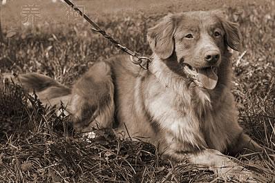 养宠物人必读的风水学