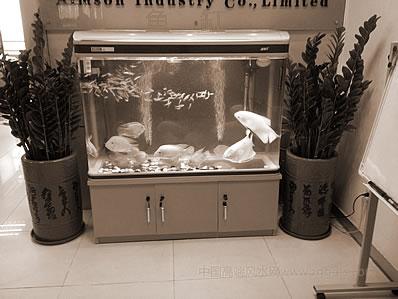 办公室桌子上养魚有什么风水学注重?