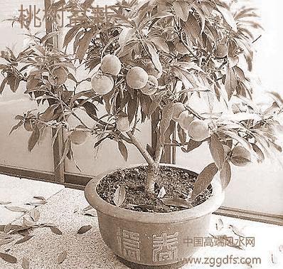 有利于住宅风水的庭院植物