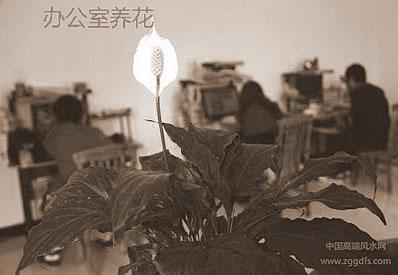 风水植物,室内花要如何养?