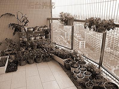 家养植物和居家风水