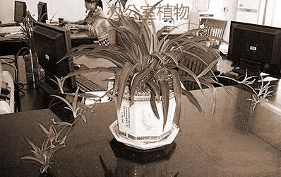 办公室植物风水摆设方式