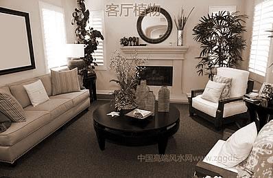 家中放置盆栽植物的风水植物