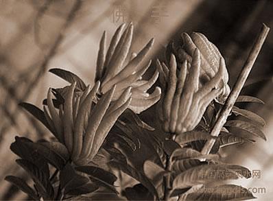 家中绿色植物放置风水学的常见问题
